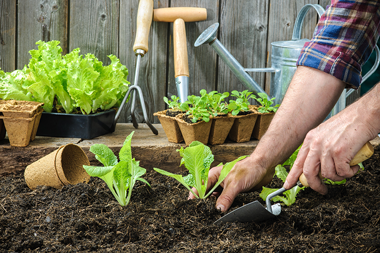 noticias bio alimentacion huerto urbano piso