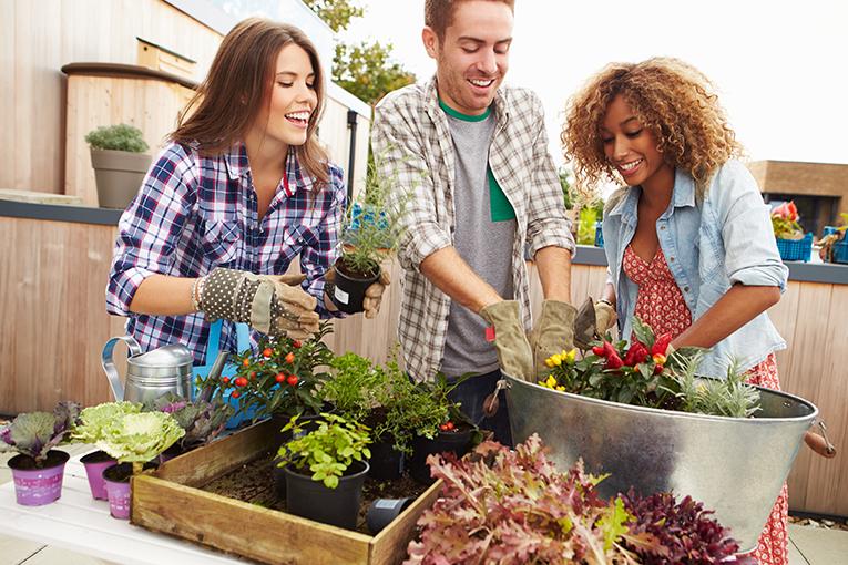 noticios bio huerto urbano plantar